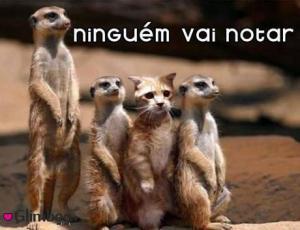 animais_engracados_632892